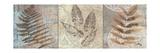 Leaves and Rosettes II Reproduction giclée Premium par Elizabeth Medley