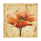 Poppy III Premium Giclee Print by Patricia Quintero-Pinto