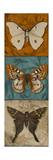 Blue Wings II Premium Giclee Print by Patricia Quintero-Pinto