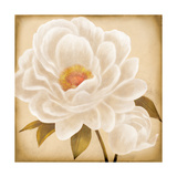 White Peonies I Prints by Vivien Rhyan