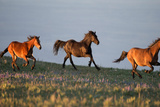 Horses in the Meadow II Photographic Print by Carol Walker