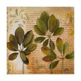 Botanica I Kunstdrucke von Patricia Pinto