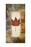 Single Leaf III Premium Giclee Print by Michael Marcon