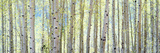 Aspen Photographic Print by Shelley Lake
