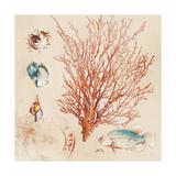 Coral Medley II Premium Giclee Print by Lanie Loreth