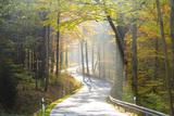 Road Through Autumn Woodland, Saxon Switzerland, Saxony, Germany Fotografie-Druck von Peter Adams