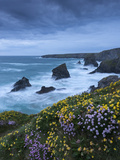 Spring Wildflowers Growing on the Clifftops at Bedruthan Steps, Cornwall, England. May Photographic Print by Adam Burton
