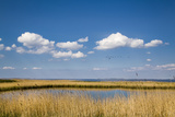 Salt Marsh, Amrum Island, Northern Frisia, Schleswig-Holstein, Germany Photographic Print by Sabine Lubenow
