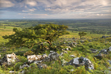 Hawthorn Trees on Dartmoor Moorland in Summer Time, Devon, England. July Photographic Print by Adam Burton
