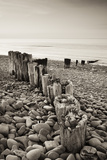 Weathered Wooden Groyne on Bossington Beach at Sunset, Exmoor National Park, Somerset Photographic Print by Adam Burton