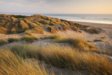 Marram Grass on the Sand Dunes of Braunton Burrows, Looking Towards Saunton Sands, Devon Photographic Print by Adam Burton