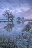Frosty Winter Morning Beside a Rural Pond, Morchard Road, Devon, England. Winter (January) Photographic Print by Adam Burton