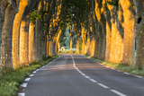 France, Provence, Vaucluse. Typical Tree Lined Road at Sunset Photographic Print by Matteo Colombo