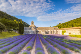 France, Provence Alps Cote D'Azur, Vaucluse. Famous Senanque Abbey in the Morning Photographic Print by Matteo Colombo