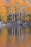 Golden Coloured Fall Foliage and Reflections on the Shores of Intake 2 Lake in the Eastern Sierras Photographic Print by Adam Burton