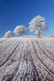 Hoar Frosted Farmland and Trees, Bow, Mid Devon, England. Winter Photographic Print by Adam Burton