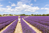 France, Provence Alps Cote D'Azur, Vaucluse, Banon. Woman Walking in Lavender Field in Summer (Mr) Photographic Print by Matteo Colombo