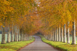 Avenue of Colourful Trees in Autumn, Dorset, England. November Photographic Print by Adam Burton