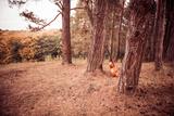 Old Guitar at Pine Woods Fotoprint van Alexey Rumyantsev