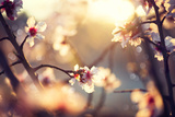 Beautiful Nature Scene with Blooming Tree and Sun Flare Fotografisk tryk af Subbotina Anna