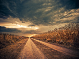 Road through Stormy Corn Field to Horizon Fotografisk trykk av Alexey Rumyantsev