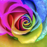 Rainbow Rose Photographic Print by Maury Mauser