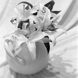 White Lily Study Photographic Print by Anna Miller