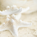 Seashore Stars Prints by Cindy Taylor