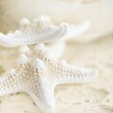 Seashore Stars Prints