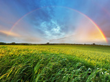 Rainbow over Spring Field Photographic Print by  TTstudio
