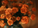Reddish Orange Miniature Roses Bouquet Photographic Print by Anna Miller