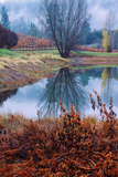 Reflection at Autumn Vineyard, Calistoga Napa Valley Photographic Print