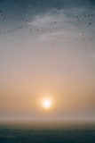 Birds, Mist and Muted Sun, Merced Wildlife Refuge Photographic Print