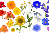 Group of Rainbow Color Flowers Isolated on White Photographic Print by Alexander Potapov