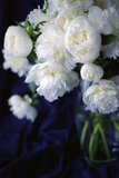 White Peonies in a Vase Photographic Print by Anna Miller