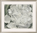 The White Calico Flower, c.1931 Art by Georgia O'Keeffe