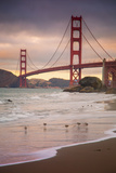 Golden Gate Bridge and Shore Birds, San Francisco Photographic Print