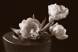 Sepia Tulips Photographic Print by Anna Miller