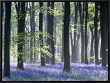 Bluebell Vision Framed Canvas Print by Doug Chinnery