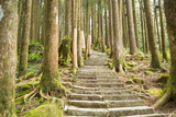 Stairway Alishan Forest Photographic Print by  hin255