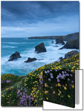 Spring Wildflowers Growing on the Clifftops at Bedruthan Steps, Cornwall, England. May Print by Adam Burton