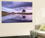 Kelly Hall Tarn at Twilight, Lake District, Cumbria, England. Autumn (November) Wall Mural by Adam Burton