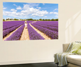 France, Provence Alps Cote D'Azur, Vaucluse, Banon. Woman Walking in Lavender Field in Summer (Mr) Wall Mural by Matteo Colombo