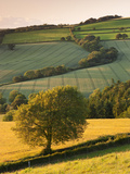 Rolling Farmland in Summertime, Devon, England. Summer Metal Print by Adam Burton