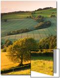 Rolling Farmland in Summertime, Devon, England. Summer Posters by Adam Burton