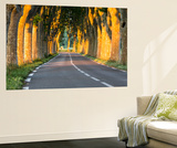 France, Provence, Vaucluse. Typical Tree Lined Road at Sunset Wall Mural by Matteo Colombo