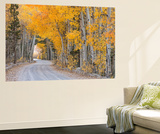 Dirt Road Winding Through a Tree Tunnel, Bishop, California, USA. Autumn (October) Wall Mural by Adam Burton