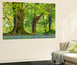 Beech and Oak Trees Above a Carpet of Bluebells in a Woodland, Blackbury Camp, Devon Premium Wall Mural by Adam Burton