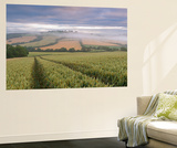 Wheat Field and Rolling Countryside at Dawn, Devon, England. Summer (July) Wall Mural by Adam Burton