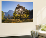 Half Dome and Elm Tree in Cooks Meadow, Yosemite Valley, California, USA. Autumn (October) Wall Mural by Adam Burton